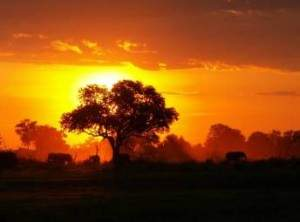 WINNER-Jan-2010--Africa-Sunset-by-Rachael-Lorenz-86271265117019_0_500